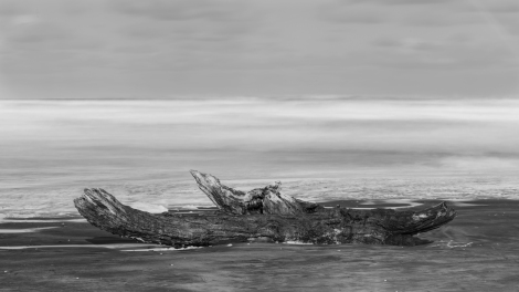 Bethells Beach Log wide