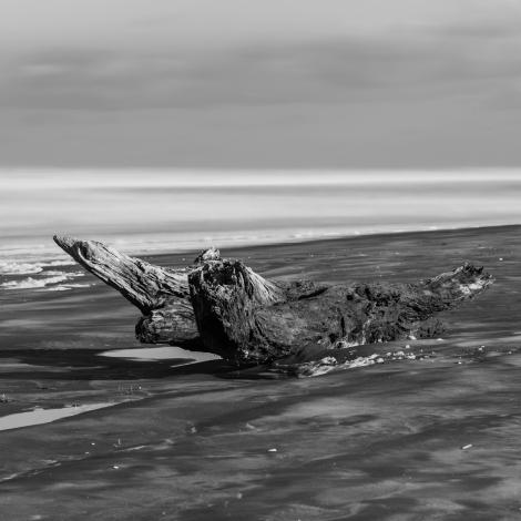Bethells Beach log